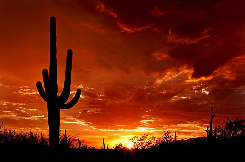 AZ_Saguaro_Sunset