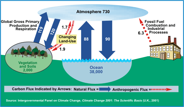Why Is CO2 Rising? Biosphere Destruction Is The Primary ...
