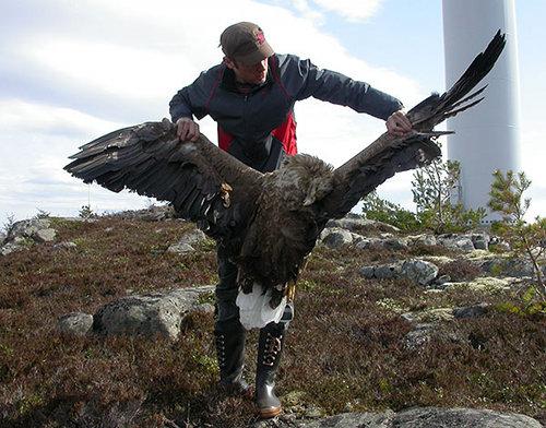 eagle-500-espen lie dahl
