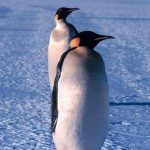 New Study Shows Antarctica Ice Is Melting 70% More Slowly Than Thought - Another Scare Bites The Dust