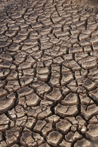 Drought Tomas Castelazo