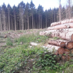 "Environmental Disaster: Northern Europe Deforestation Up 49% Due To Effort To Meet ""CO2 Targets""!"