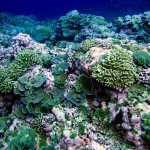 New Paper: Sea Levels Higher 4000 Years Ago With Reefs Adapting